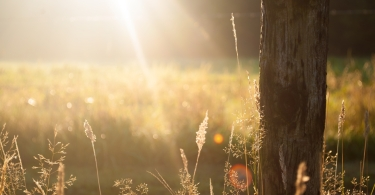 Sun rays in the field thumbnail